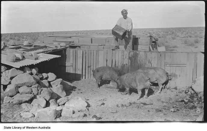 ~1930 - 1939. An unlikely place to raise pigs - Forrest, on the Nullarbor Plain.