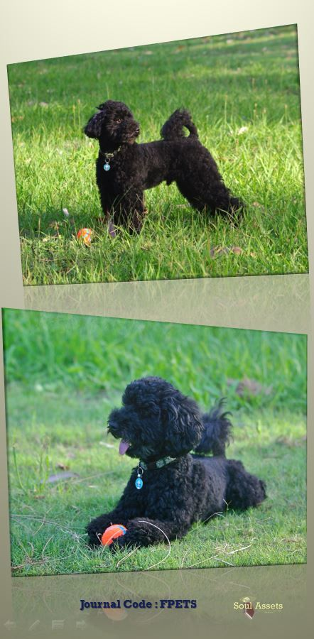 Soul Assets uses the code FPETS to create a folder for all your important document keepsakes and prized possessions for your family pet.Breed Toy Poodle