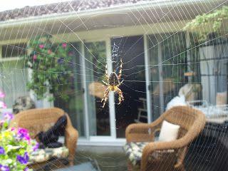 Keith Loreth Cosmic Art: Spider