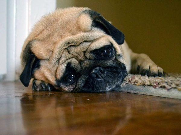 Viele traurige Tiere
