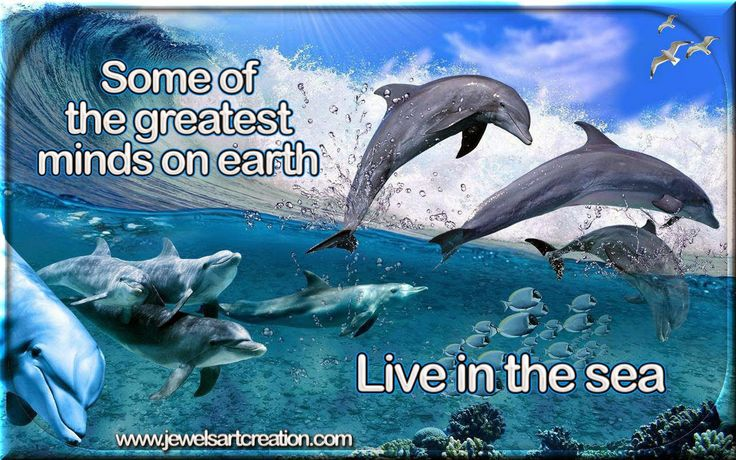 Jewels Art Creation: Dolphin Quote