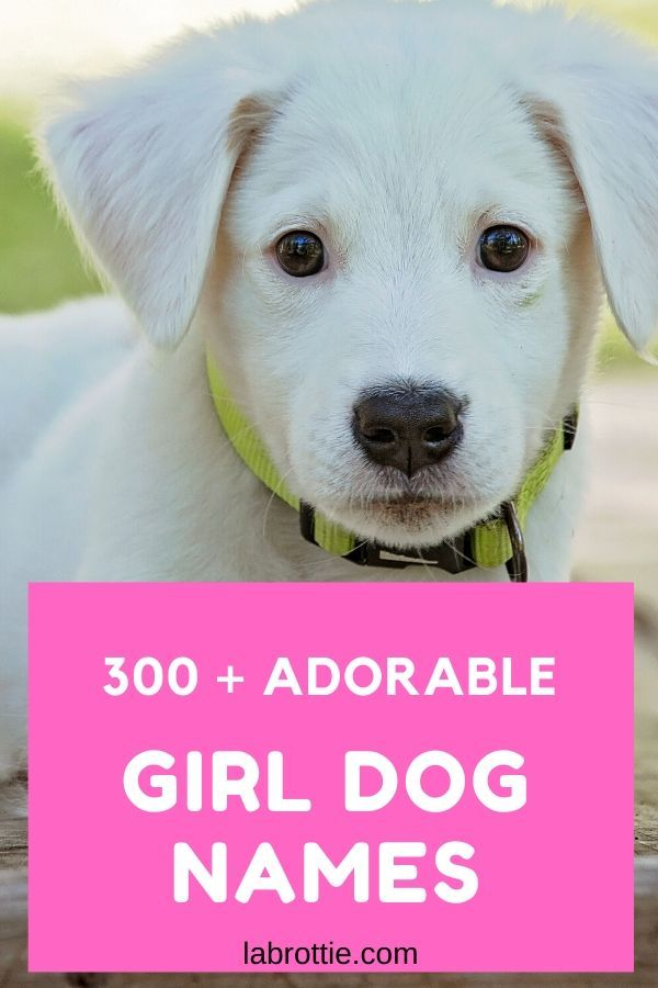 300 Girl Dog Names A Z Labrottie Com In 2020 Girl Dog Names Puppies Names Female Puppy Girl Names