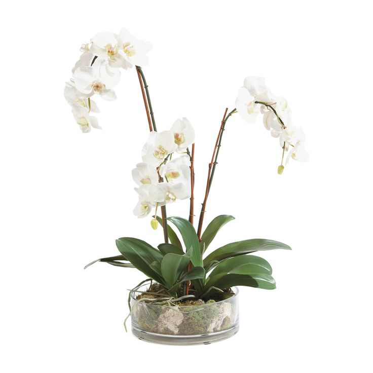 1000 images about p flowers on pinterest white Christmas orchid arrangements