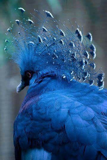 Best 25 Hummingbird Pictures Ideas On Pinterest Humming