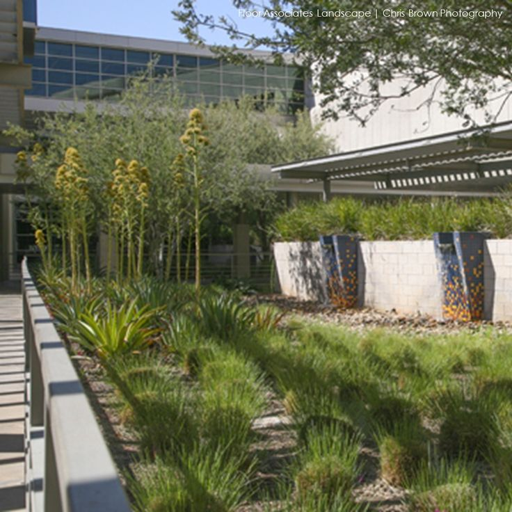 Design Icon Floor Associates created this healing garden at Banner Good Samaritan Medical Center. The combination of desert plants and trickling water create a peaceful transition space.