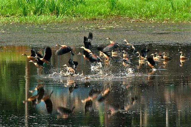 Inside Thattekad Bird Sanctuary by Kerala Tours