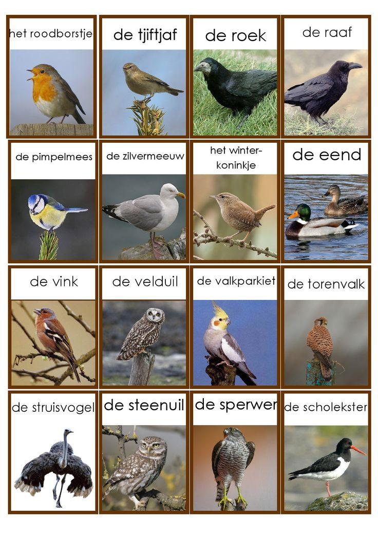 vogels 3