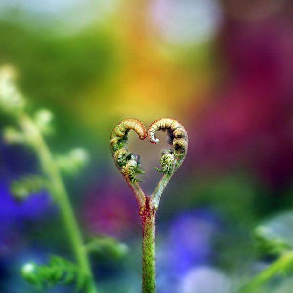 The nature of love!: Heart Shape, Nature S, Beautiful Heart, Ferns, Photo, Flower