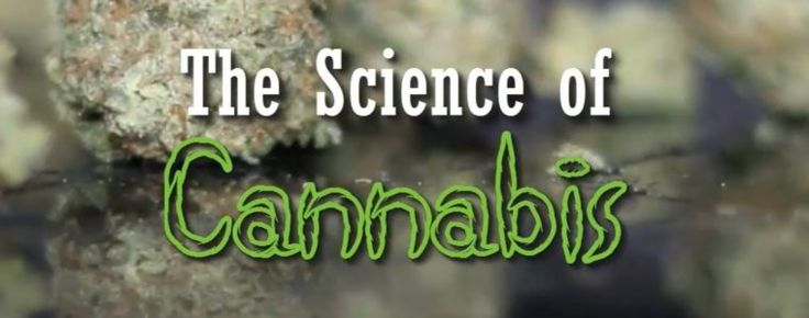 The Science of Cannabis (Documentary) - Weed on steroids