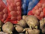 Посадка картофеля на сыром огороде с