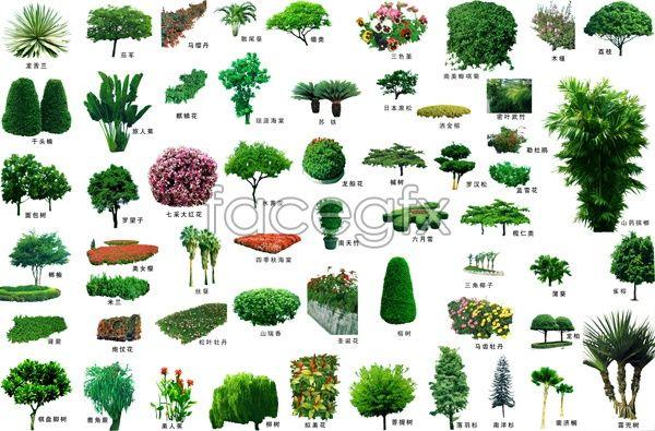 Plantas en psd gratis imagui for Little trees for landscaping