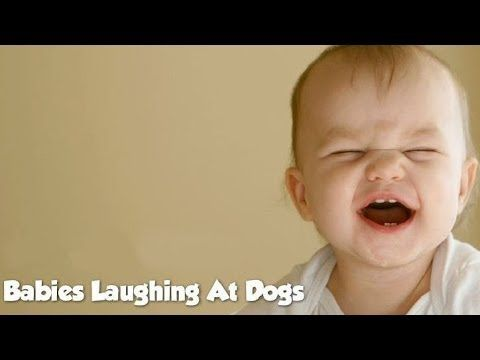 Babies Laughing at Dogs Compilation