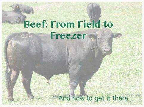 How to source out grass-fed beef and questions to ask before you buy.