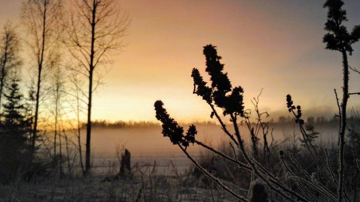 SuviMaria http://www.stoori.fi/suvimaria/last-days-of-january/