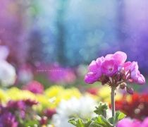 the flowers are the very main part of the nature and also very useful ways of the message given into it