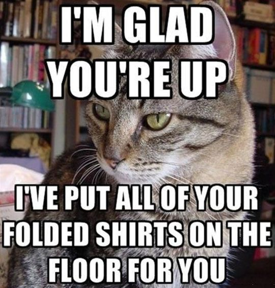 You're Welcome, Human  (our cat feels it's her job to bring all the sock balls downstairs...