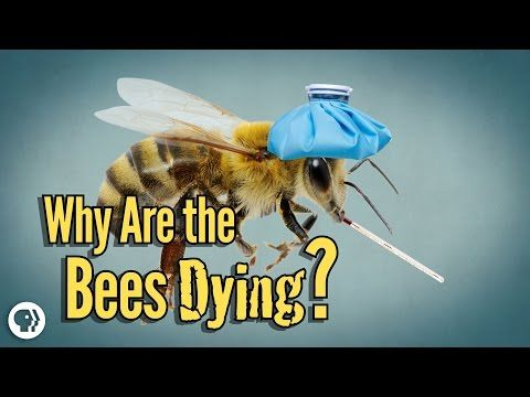 Why Are The Bees Dying? - YouTube