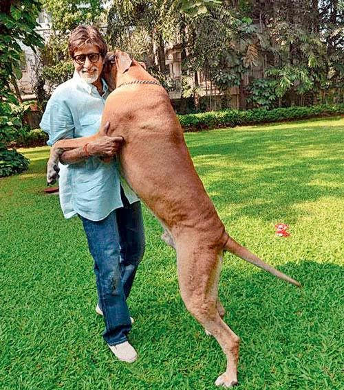 Amitabh Bachchan with pet dog Shanouk who passed away in 2013. Pic/mid-day archives | #indipin