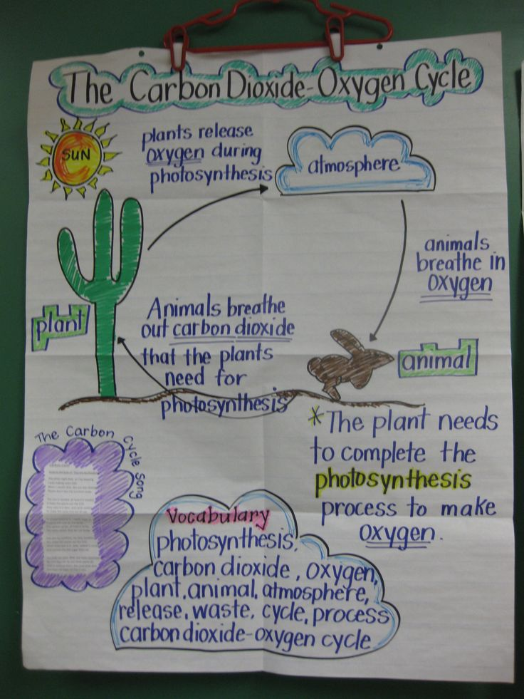 STAAR review anchor chart. I make this one on the Carbon Dioxide Oxygen cycle to review before the 5th Grade Science STAAR test