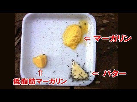 【危険毒物】 マーガリンはプラスチックだった!? - YouTube日本人の常識は世界の非常識。マーガリンは食べ物ではありません。