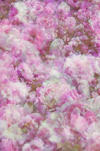 Flora Plenteous 21