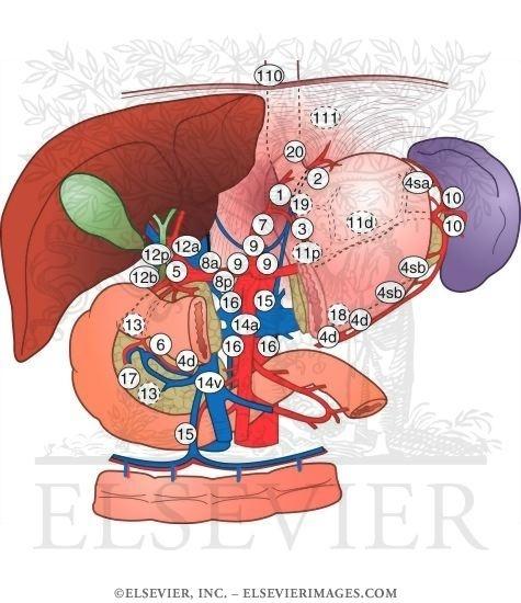 Quais linfonodos devem ser ressecados nos tumores ANTRAIS?