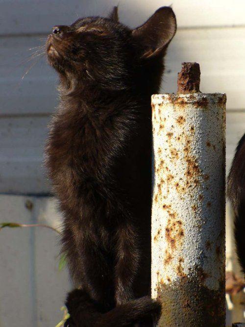Snobby cat
