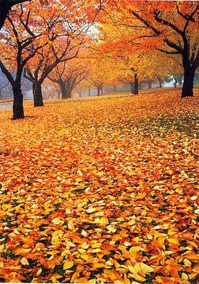 Autumn days at High Park, Toronto, Canada. Discover all of Toronto's secrets with theculturetrip.com