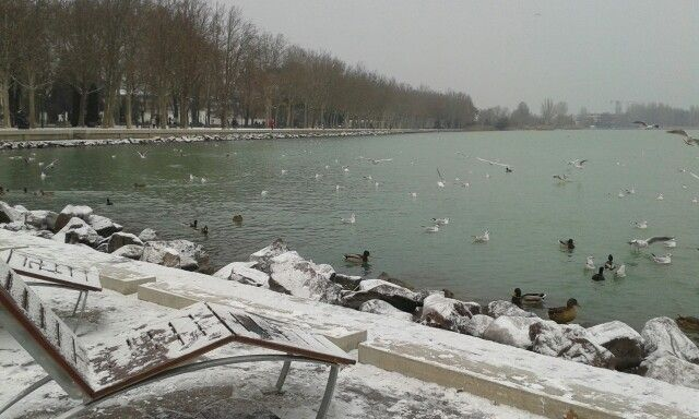 Tagore sétány in Balatonfüred. Winter... Birds... Snow... I love it<3