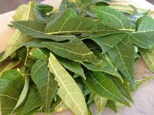 Papaya leaf as cure for dengue - raw juice from leaves