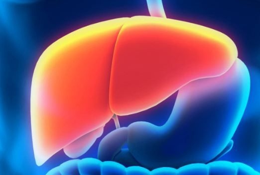 Can You Live without a Liver?