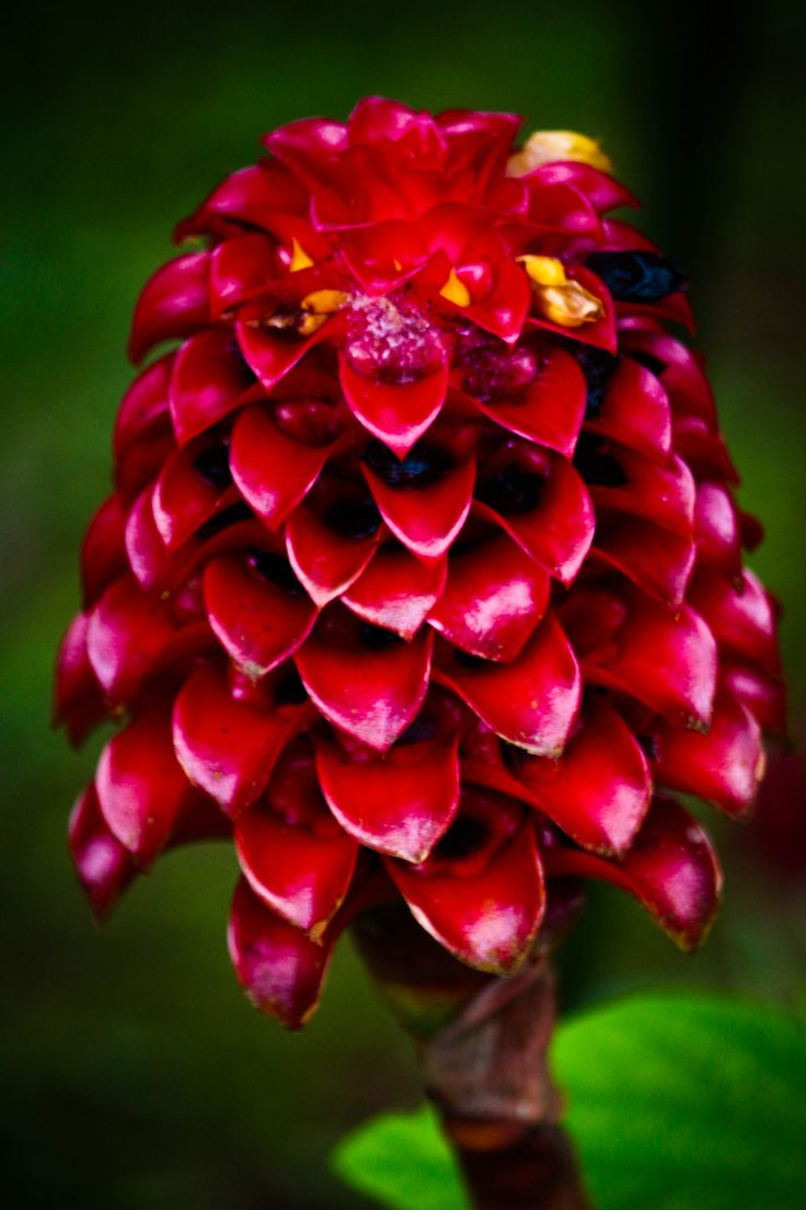 Eye-catching Flower