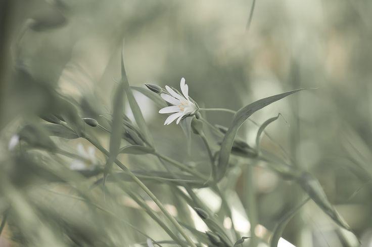 primavera by Graziella Serra Art & Photo on 500px