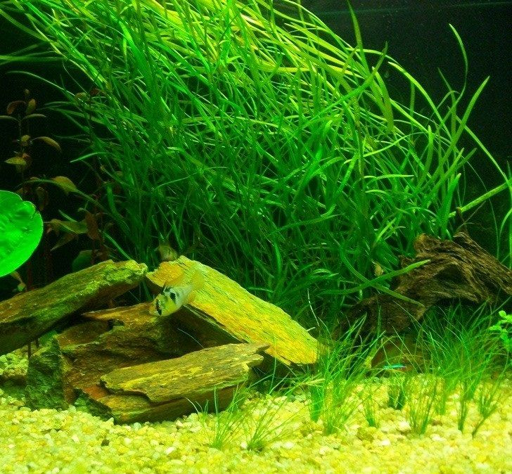 1000 images about fresh water aquatic plants and for Freshwater pond plants