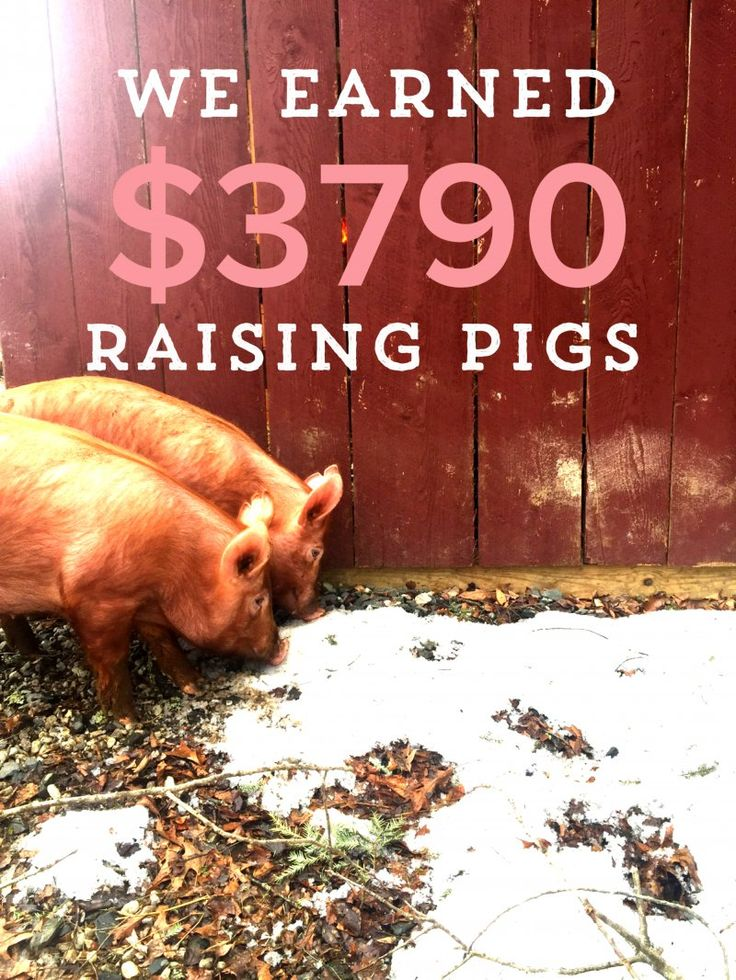 Learn all about how much it costs to raise pastured pigs, and how much you can earn from selling pastured pork!