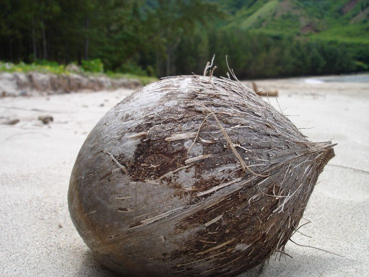 Coconut Oil Uses and Benefits: Food Recipes, Acai Berries, Detox Food, Coconut Oil Used, The Body, Health Benefits, Coconut Oil Benefits, Bestdiet Loseweight, Burnfat Bestdiet