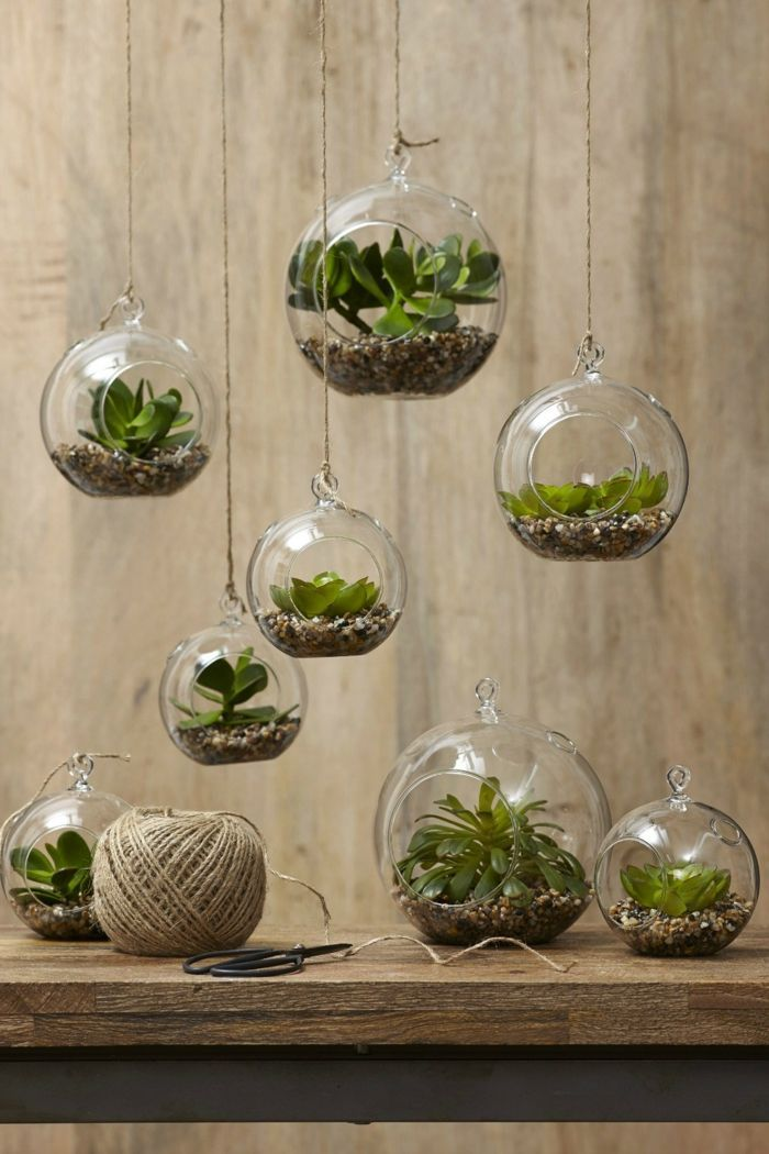 Succulents in the eye-catching glass – Creative decoration ideas with plants