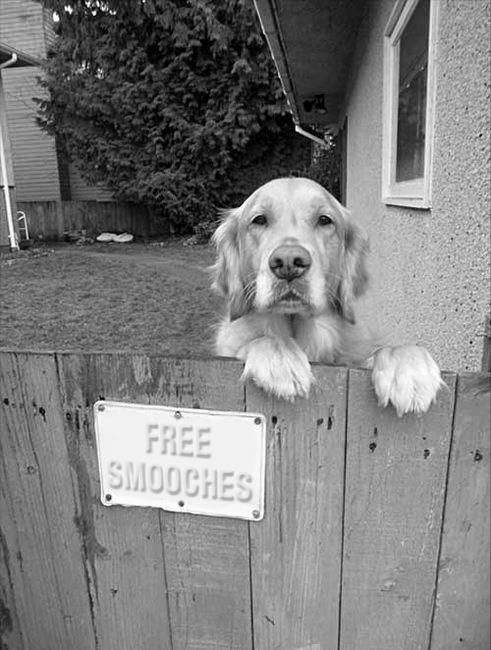 Adorable!: Doggie, Free Smooches, A Kiss, Puppies Kiss, Beware Of Dogs, Dogs Signs, Golden Kiss, Front Doors, Golden Retriever