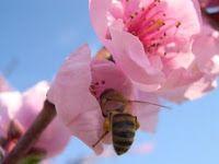 φυσικά καλλυντικά, αλχημείες & ελιξίρια: happy bee, σαπούνι με προϊόντα μέλισσας