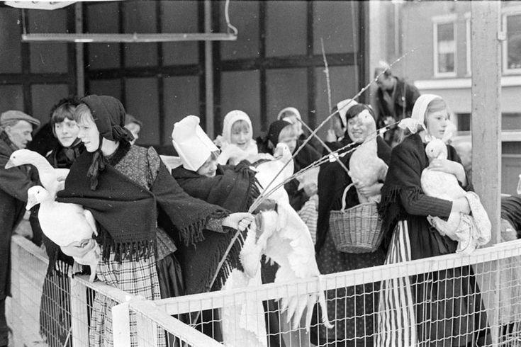 COEVORDEN-GANZENMARKT-MISS GANZENHOEDSTER De ganzenmarkt in het Drentse dorp Coevorden is ook het podium waar jaarlijks miss-ganzenhoedster wordt gekozen. Vroeger brachten de meisjes de vetgemeste ganzen vlak voor Kerst naar de markt om ze te verkopen. Tegenwoordig is het een meer folkloristische aangelegenheid. Foto: de meisjes brengen de ganzen naar de markt. #Drente