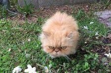 Gatinho mal-humorado é adotado mas parece não estar gostando muito da adoção…