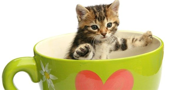 Cat Cafe to Open in Melbourne