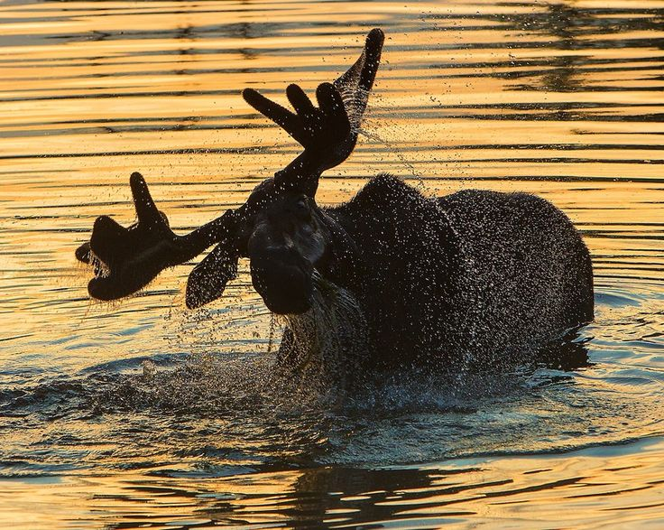 500px / Evening Splash by Doug Dance. Riding Mountain National Park, Manitoba