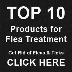 Stop Flea Bites from Itching - Quick Fix to Relieve Itchy Skin, for Pets & People