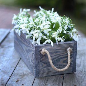 Ящичек для цветов ― BlueberryJam