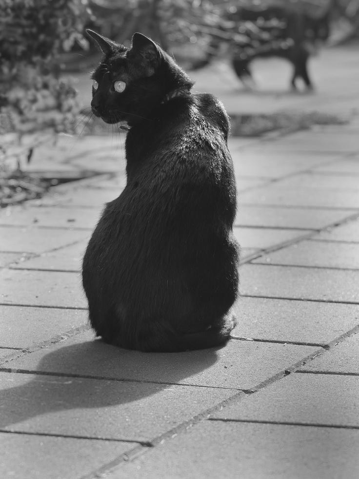 Black cat spirit guide … Pinteres…