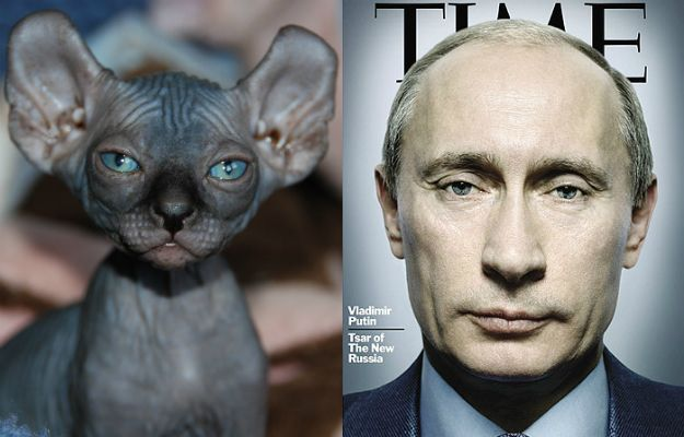 The similarity