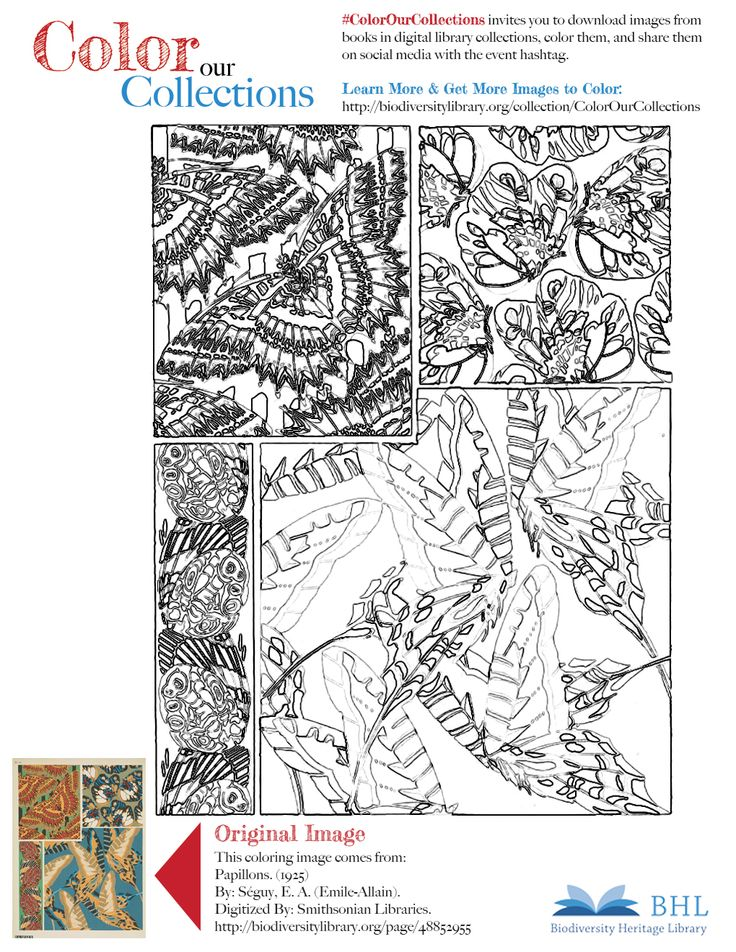 """#ColorOurCollections. Original Image: http://biodiversitylibrary.org/page/48852955. To download this image, right click on the pin and choose """"save image as"""" to save the image to your computer. You can then print and color at your leisure!"""