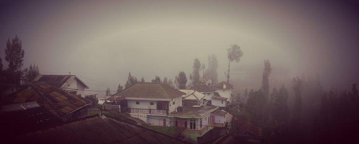 Tosari, Mount Bromo. Java, Indonesia