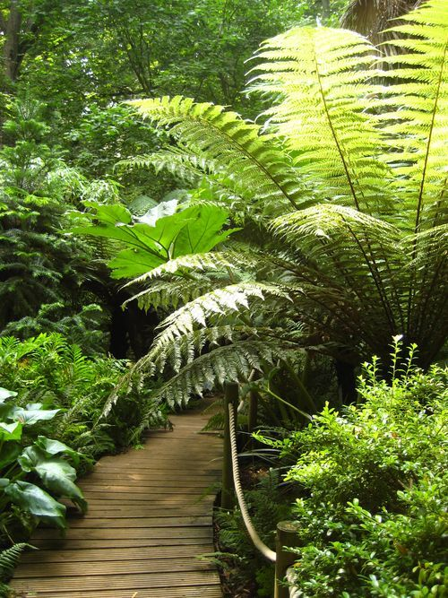 Abbotsbury Subtropical Gardens - Abbotsbury, Weymouth, Dorset.  Opening Times (2013): Each day  - except 21st December to 1st January - , 10:00 to 17:30 or 16:00 in winter.